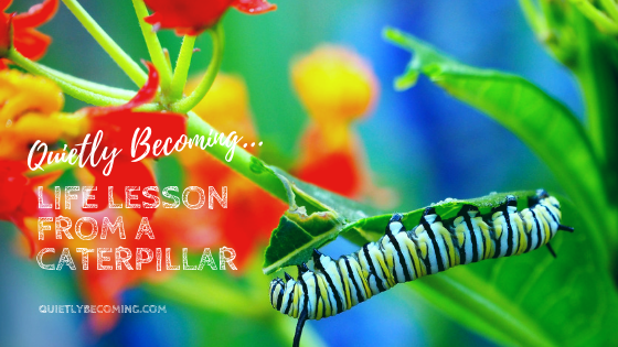 quietly becoming your purpose… life lesson from a caterpillar